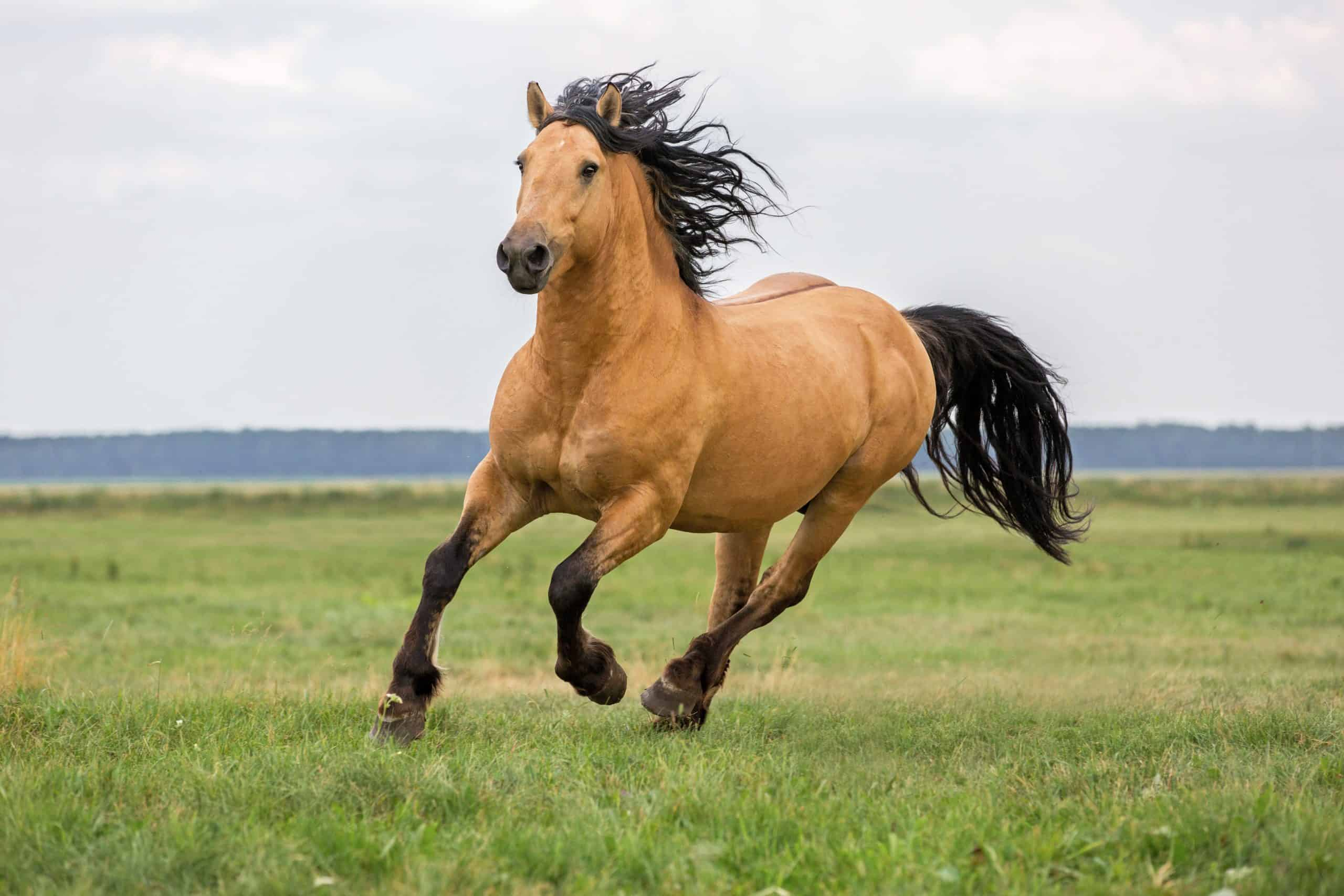 Horse running on a summer meadow.