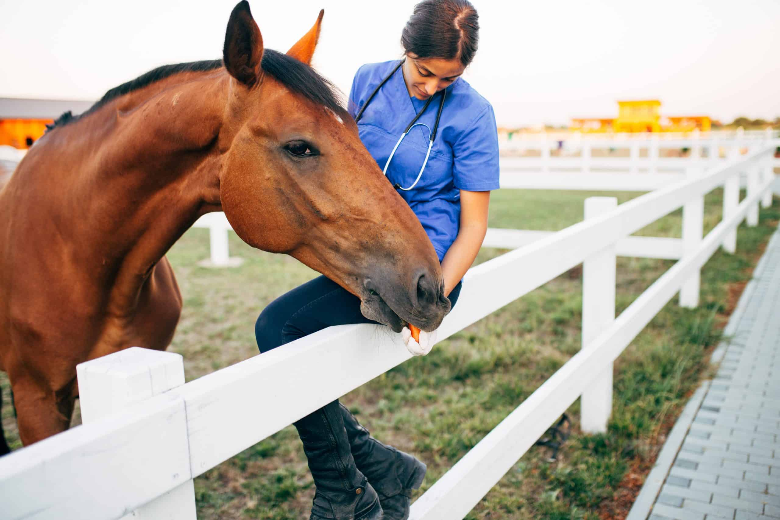 horse owner first aid skills taking pulse