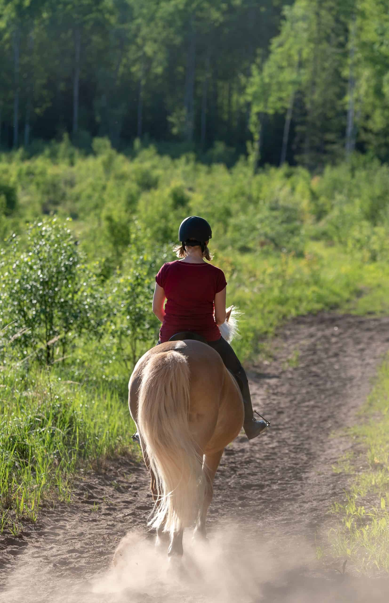 sitting trot Woman horseback riding in forest