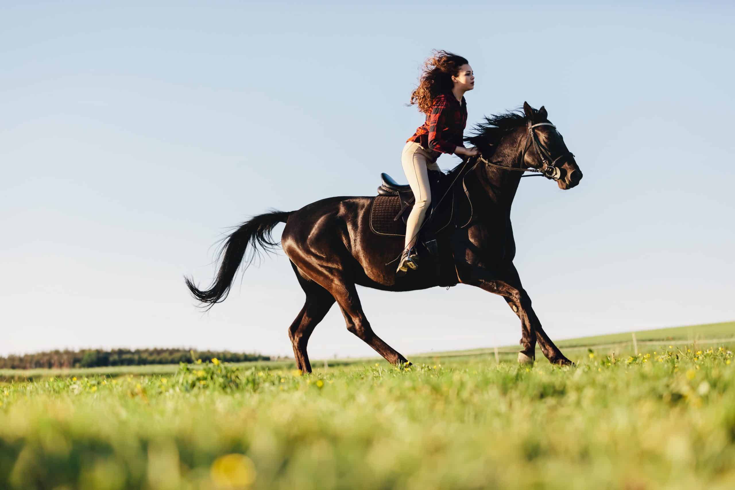 Young girl gallopading on a bay purebred horse. Summer outdoor activities. Animals.