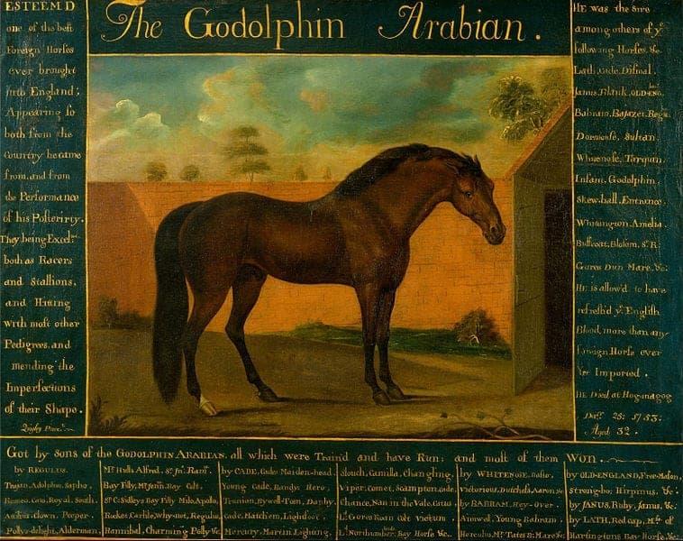 a3 758px-Daniel_Quigley_-_The_Godolphin_Arabian_-_Google_Art_Project
