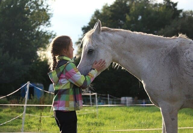 a5 horse-955085_640