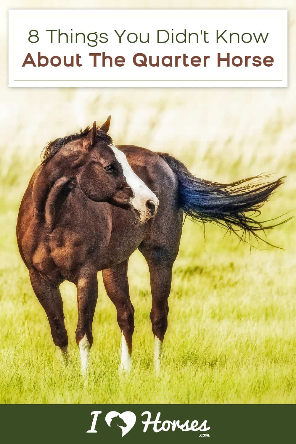 facts about the quarter horse