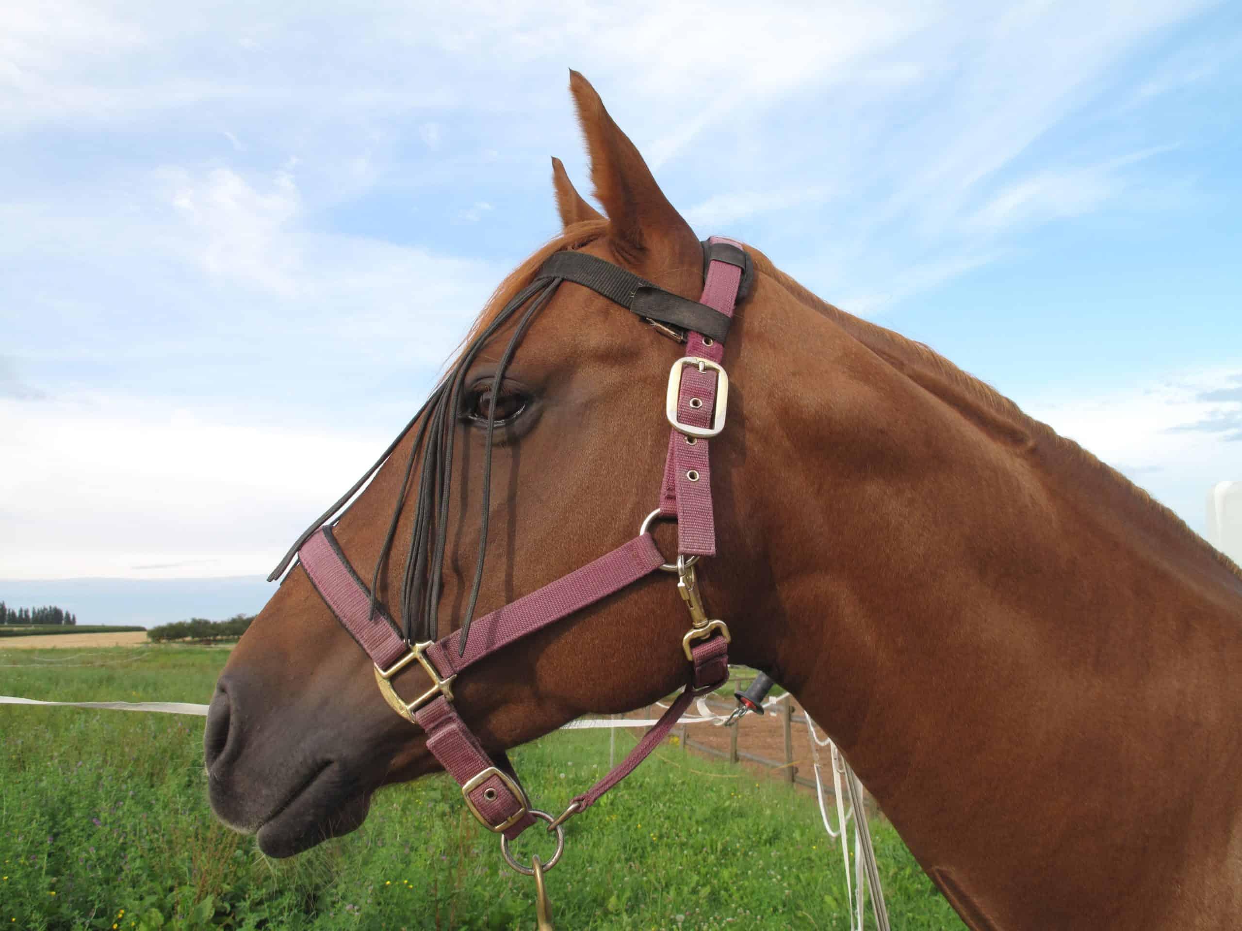 Beautiful Quarter Horse