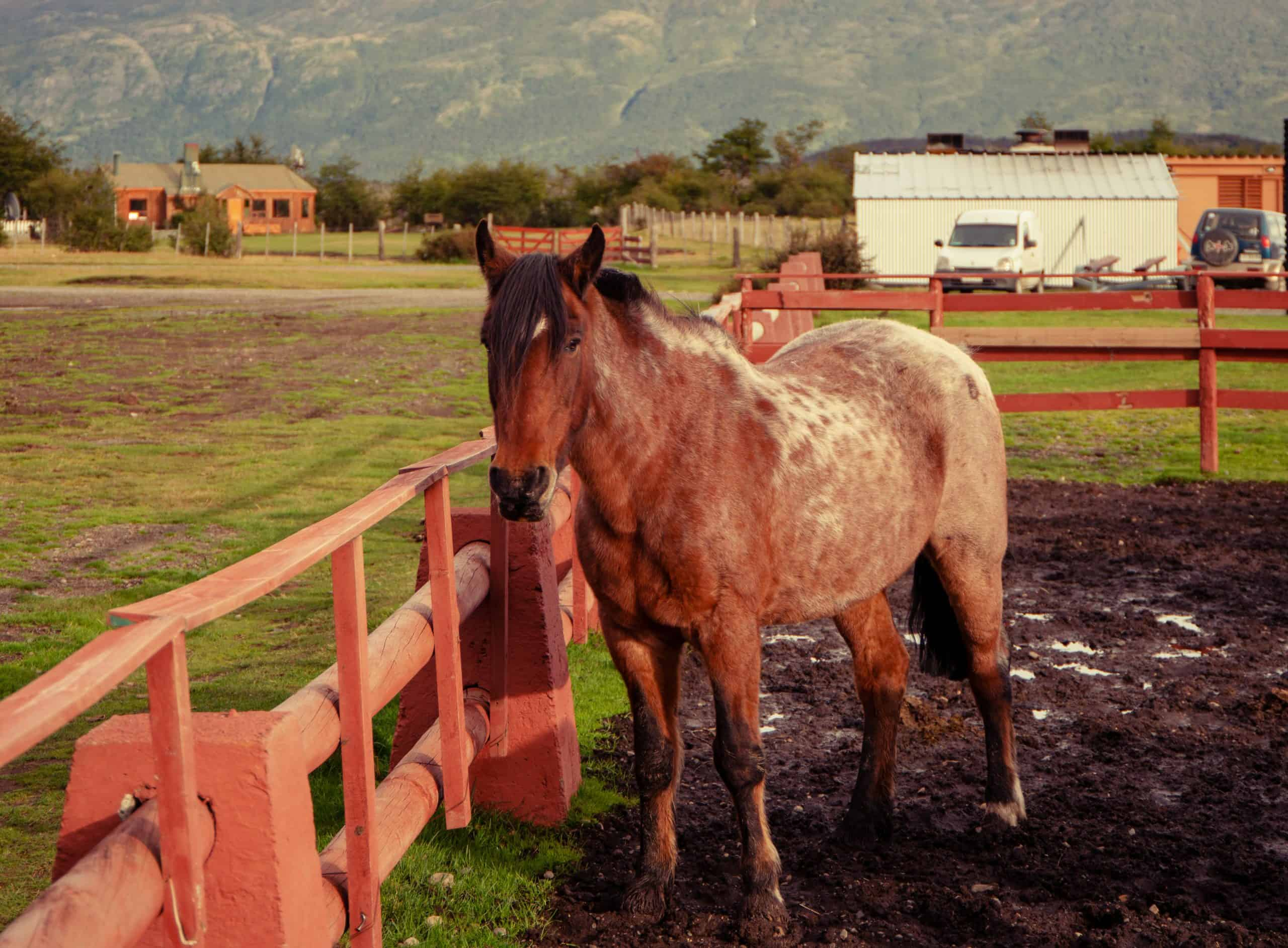 Horse in stable in Chile