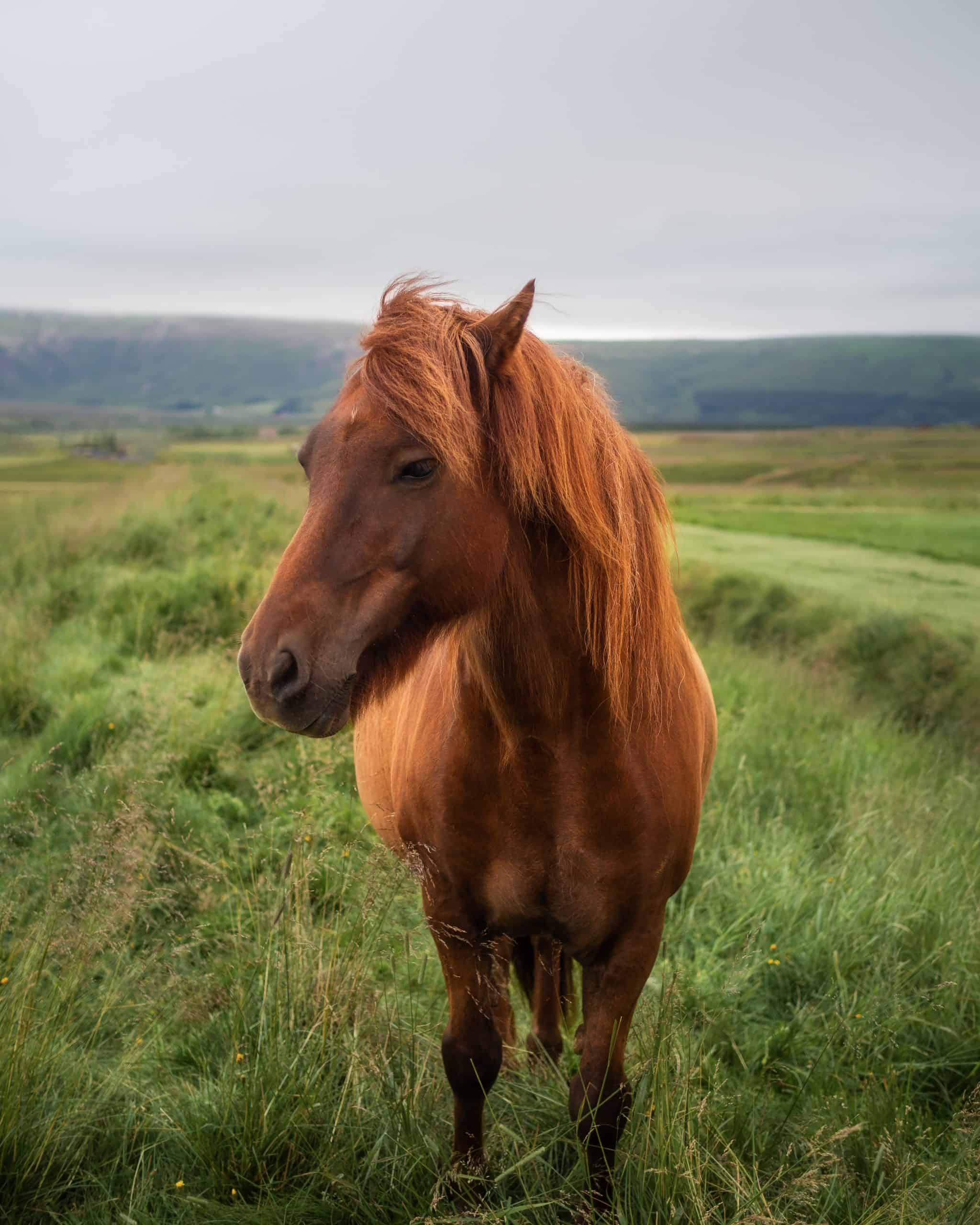 horse with curly mane