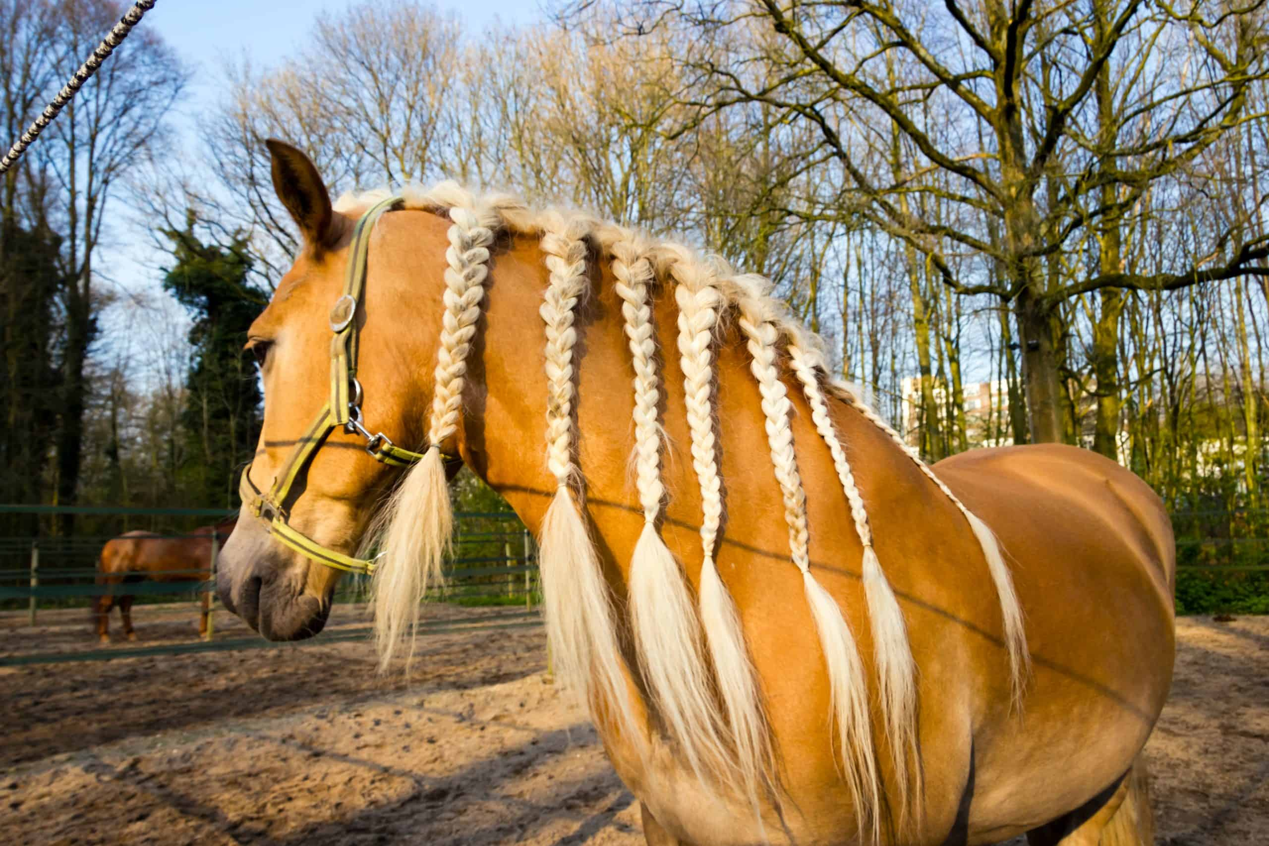 Horse with braids agains spring background