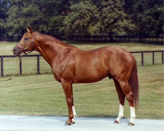 """Secretariat at stud"" by Source (WP:NFCC#4). Licensed under Fair use via Wikipedia"