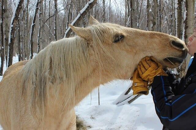 hu6 horse-331979_640