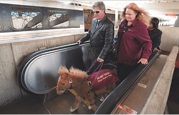 Image source: Guide Horse Foundation / Todd Sumlin- Charlotte Observer