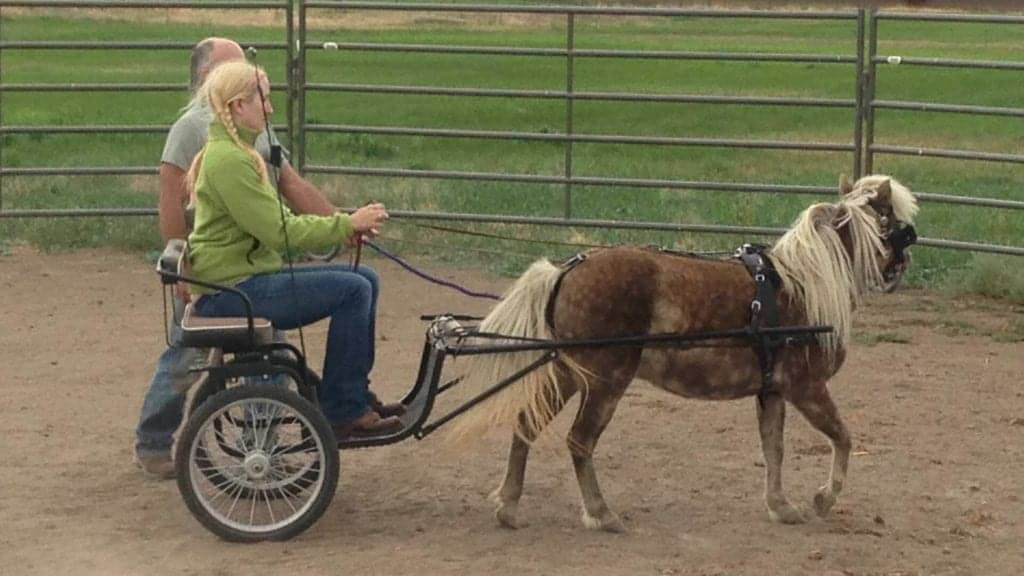 """This is one of my own miniature horses, Arwen. She stands at around 35""""."""