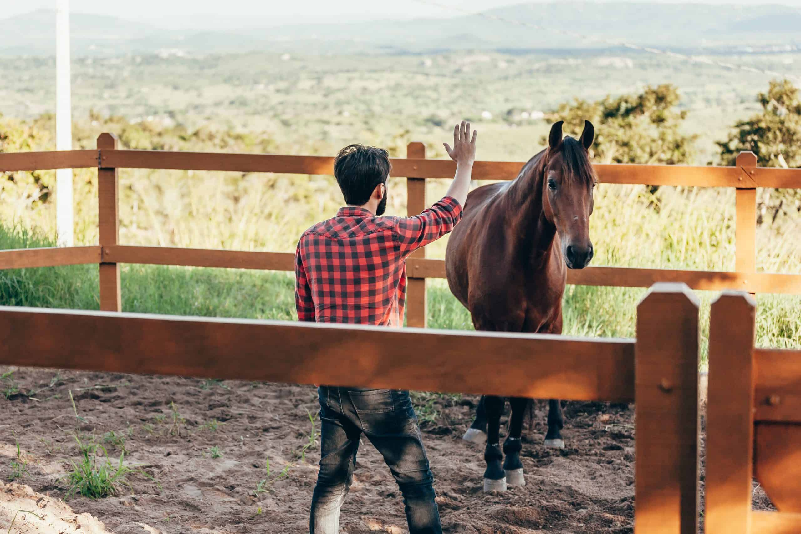 Young farmer taming horse in corral