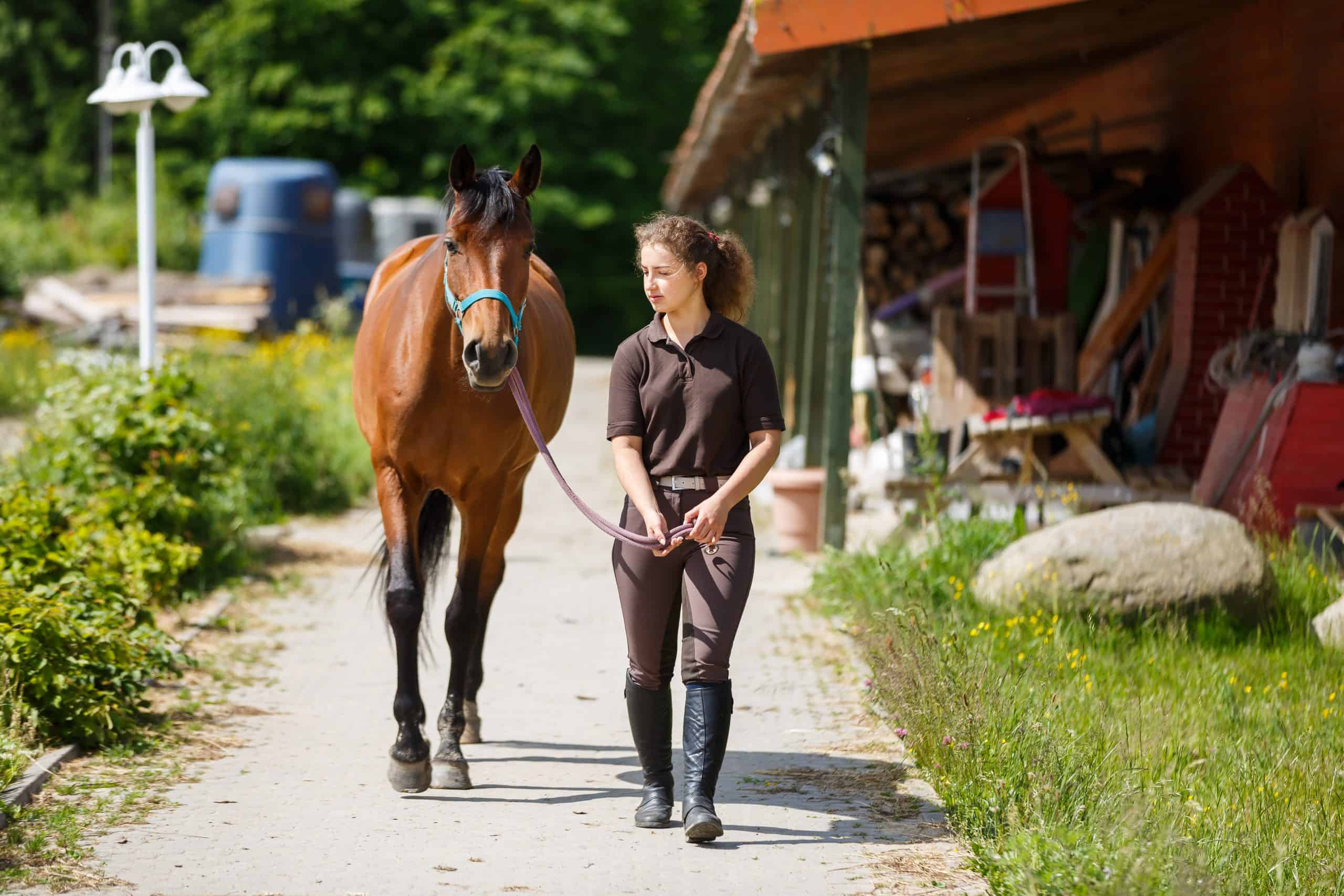 Rider with the horse are walking in a stable outdoors