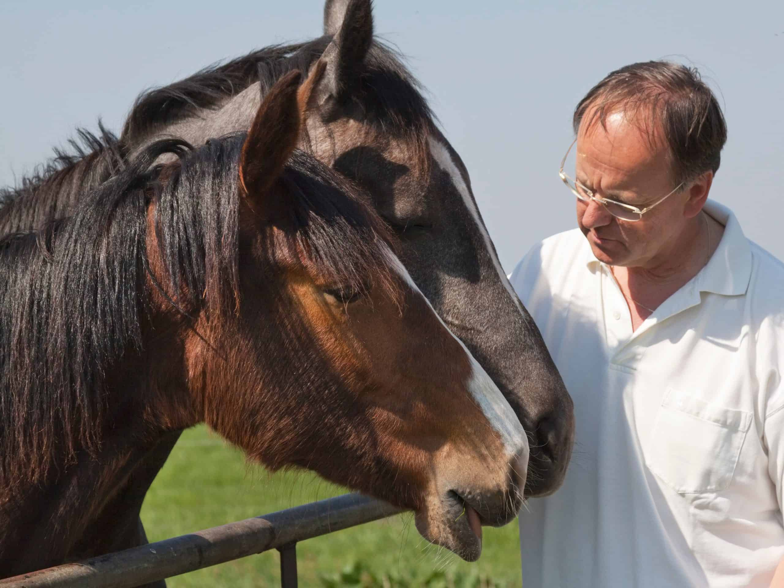 close-up of a man talking to two horses - for more horses calm a nervous horse