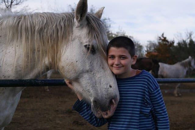 horse-747555_640