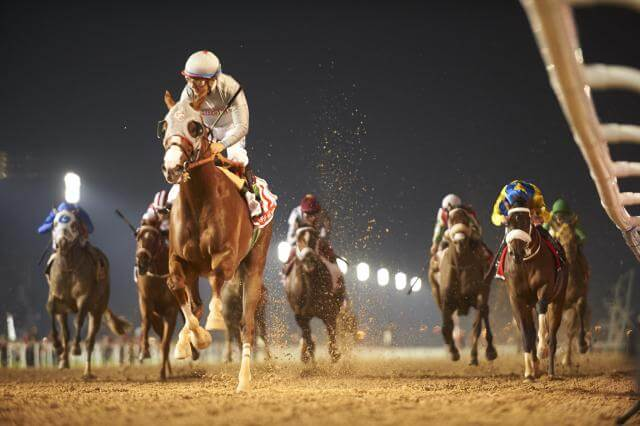 California Chrome (USA) (Art Sherman – Victor Espinoza) wins the Group 1 Dubai World Cup Sponsored by Emirates Airline at the Dubai World Cup meeting on March 26th 2016. (Credit: Dubai Racing Club // Andrew Watkins)