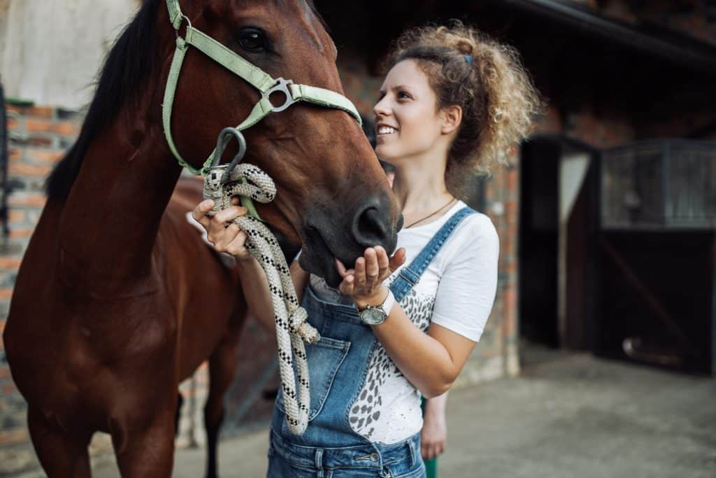 tips for better communication with your horse