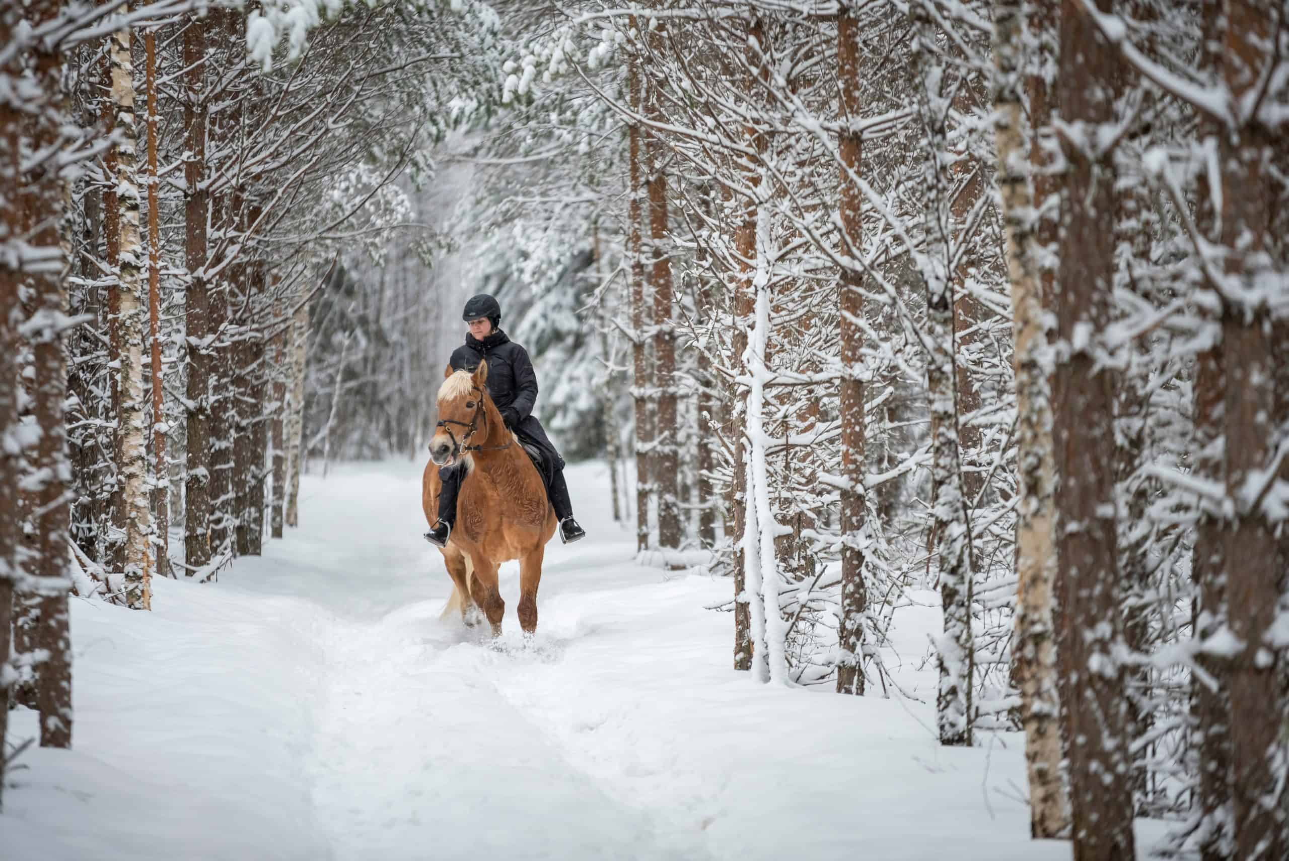 Woman horseback riding in forest in winter