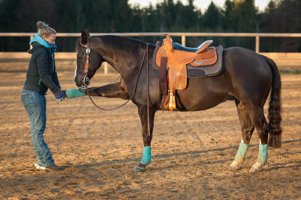 Manual Stretching of the Horse's Shoulder