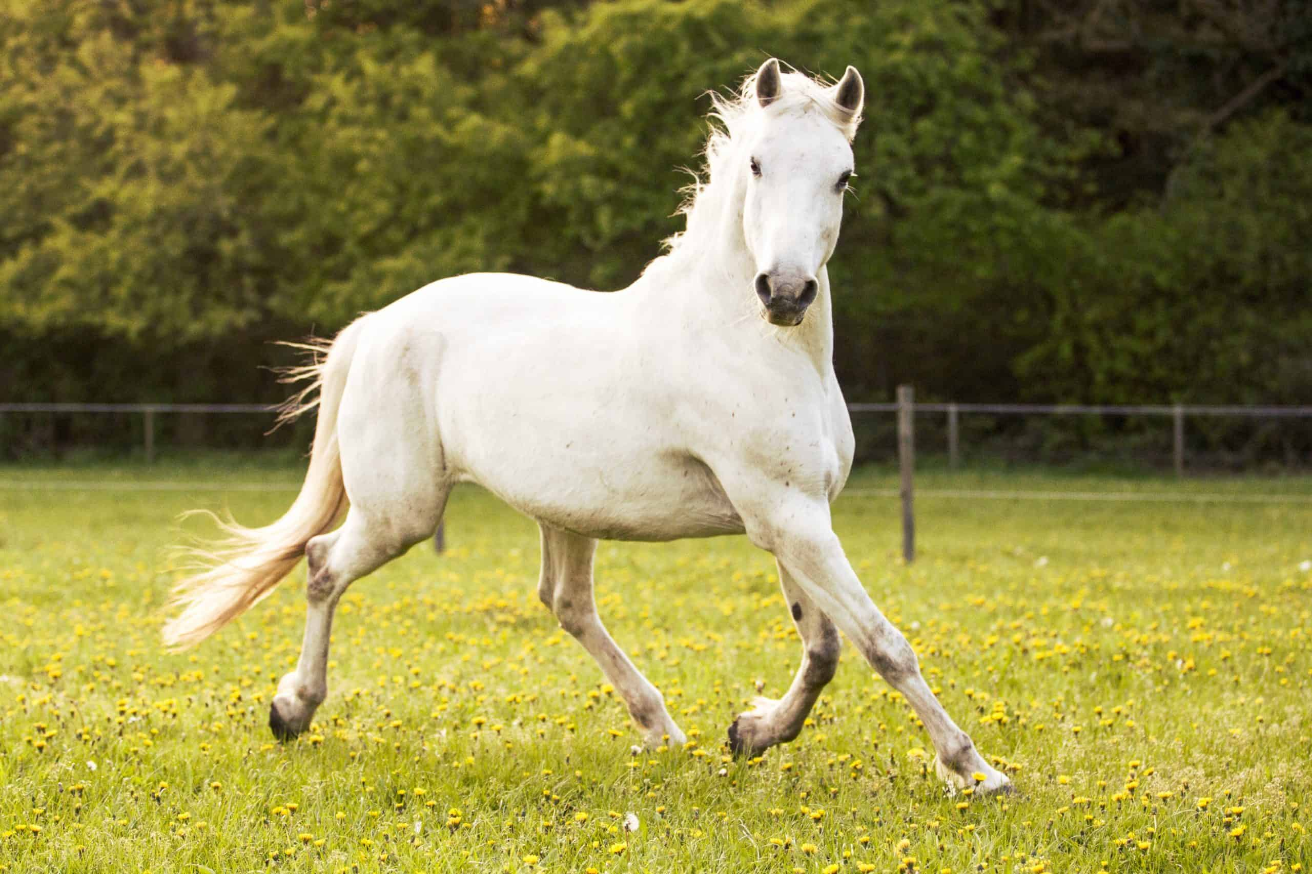 horse running free on the pasture