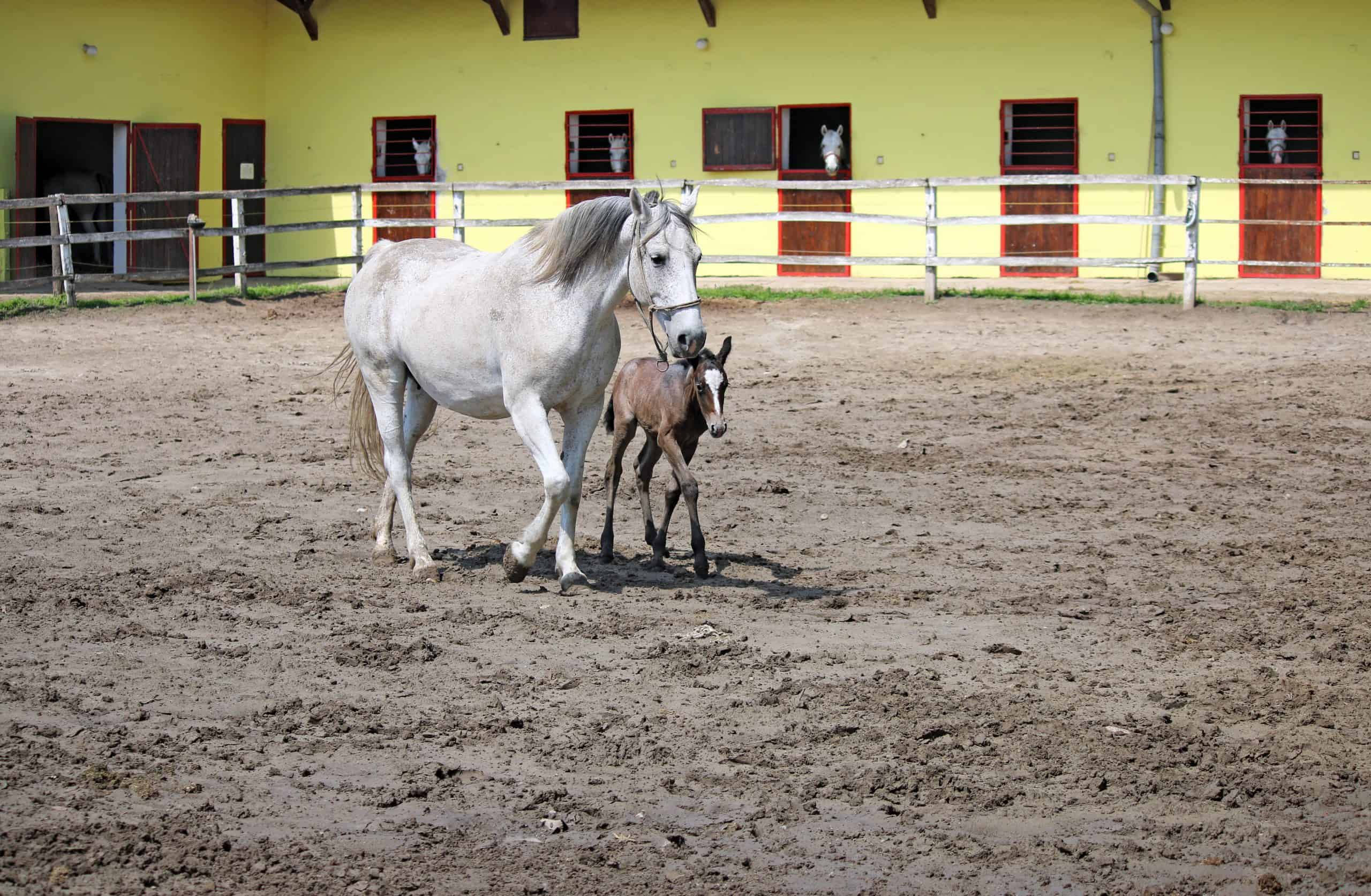 ranch with horses