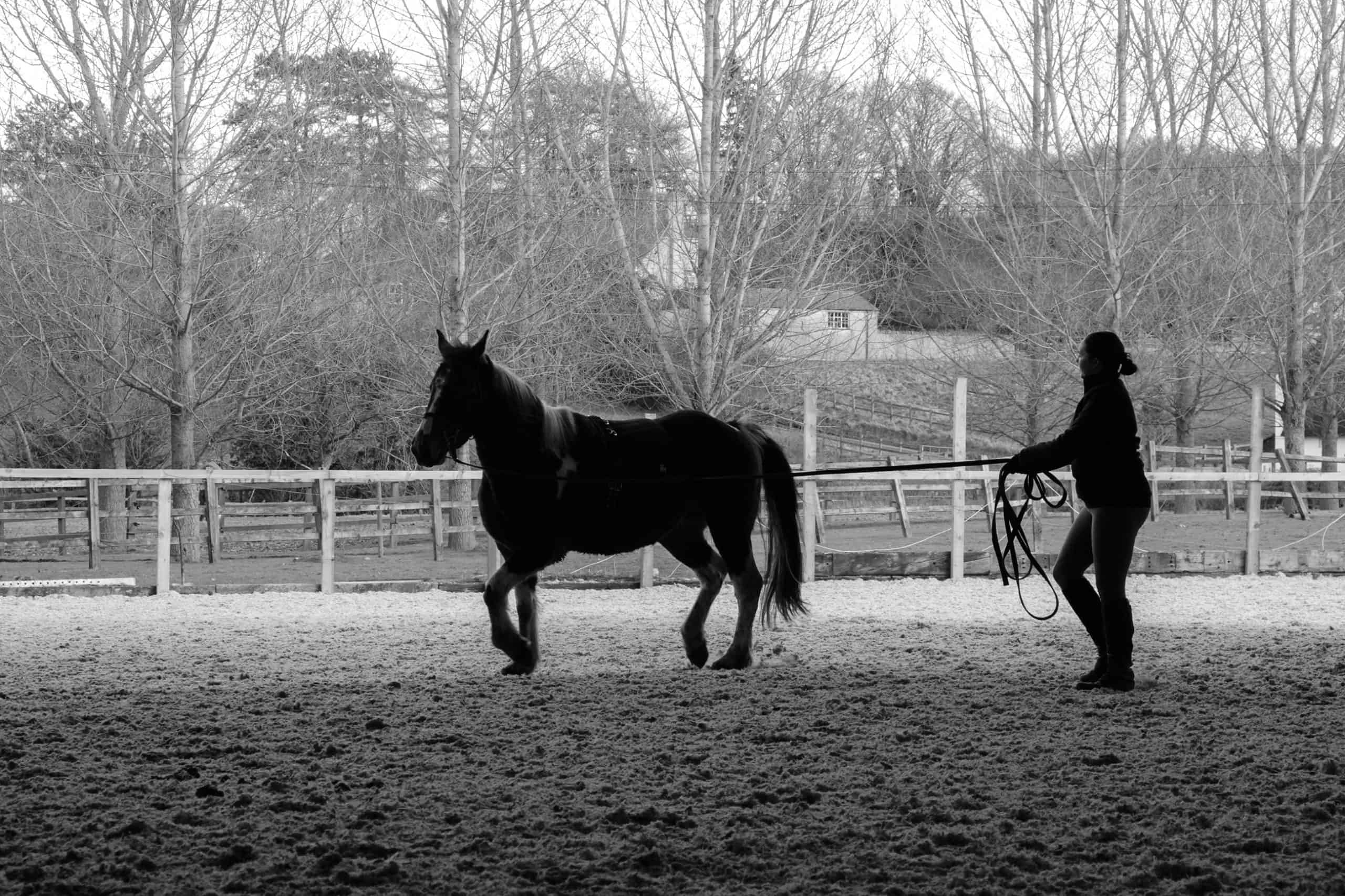 woman and pony in silhouette. Horse being exercised on long reigns on soft arena surface within a countryside backdrop