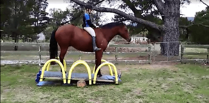 horseseesaw1