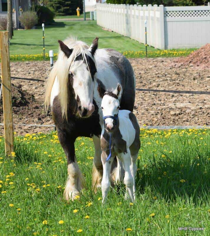 Reese's Pieces and her colt.