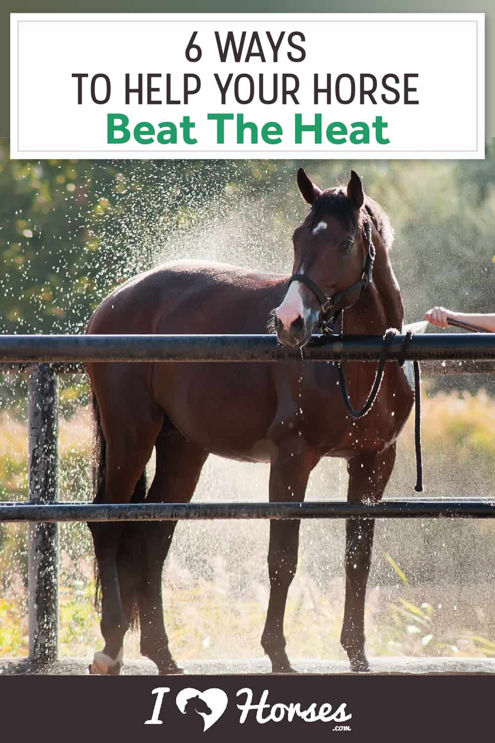 6 Ways To Help Your Horse Beat The Heat