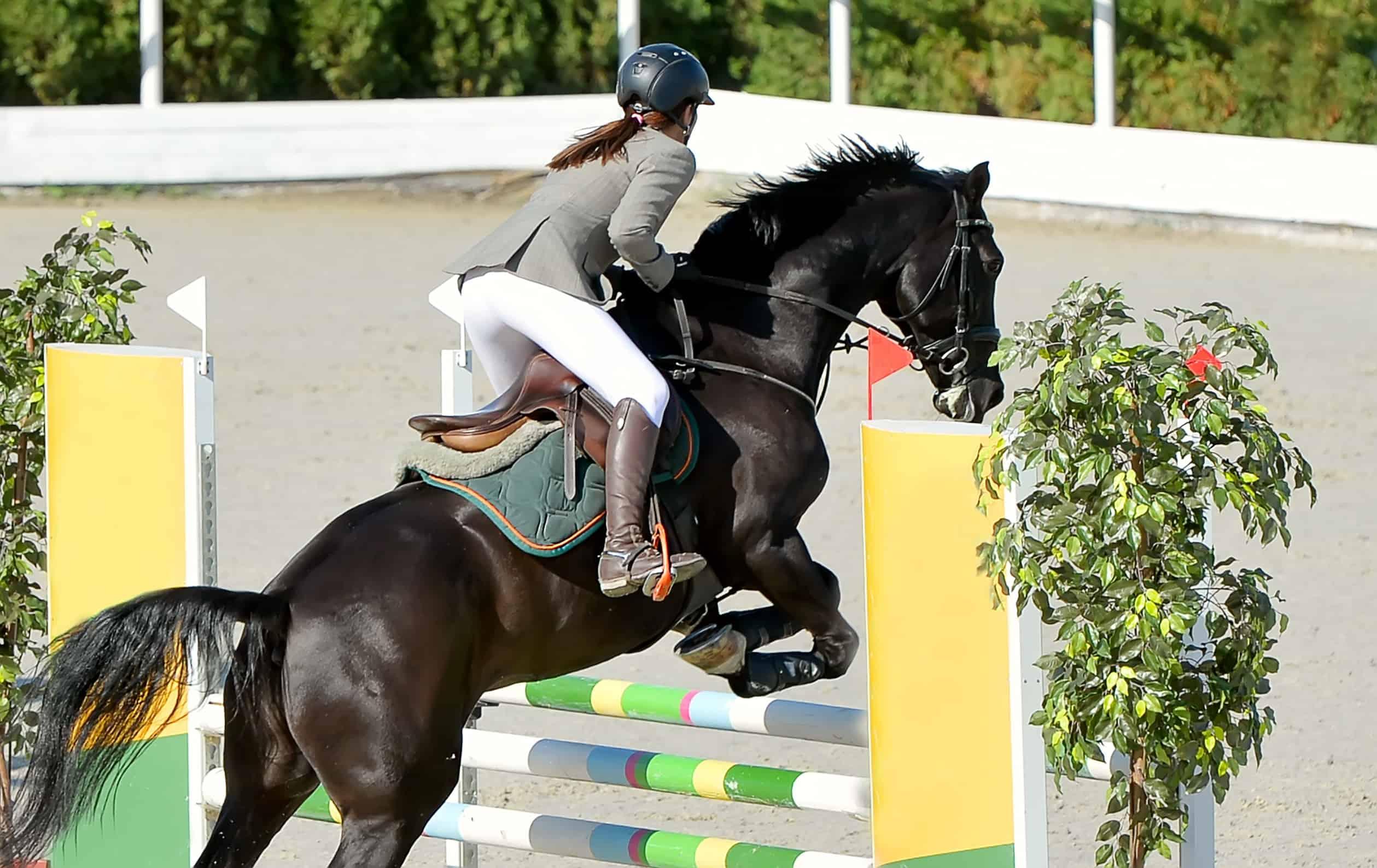 horseback riding cost