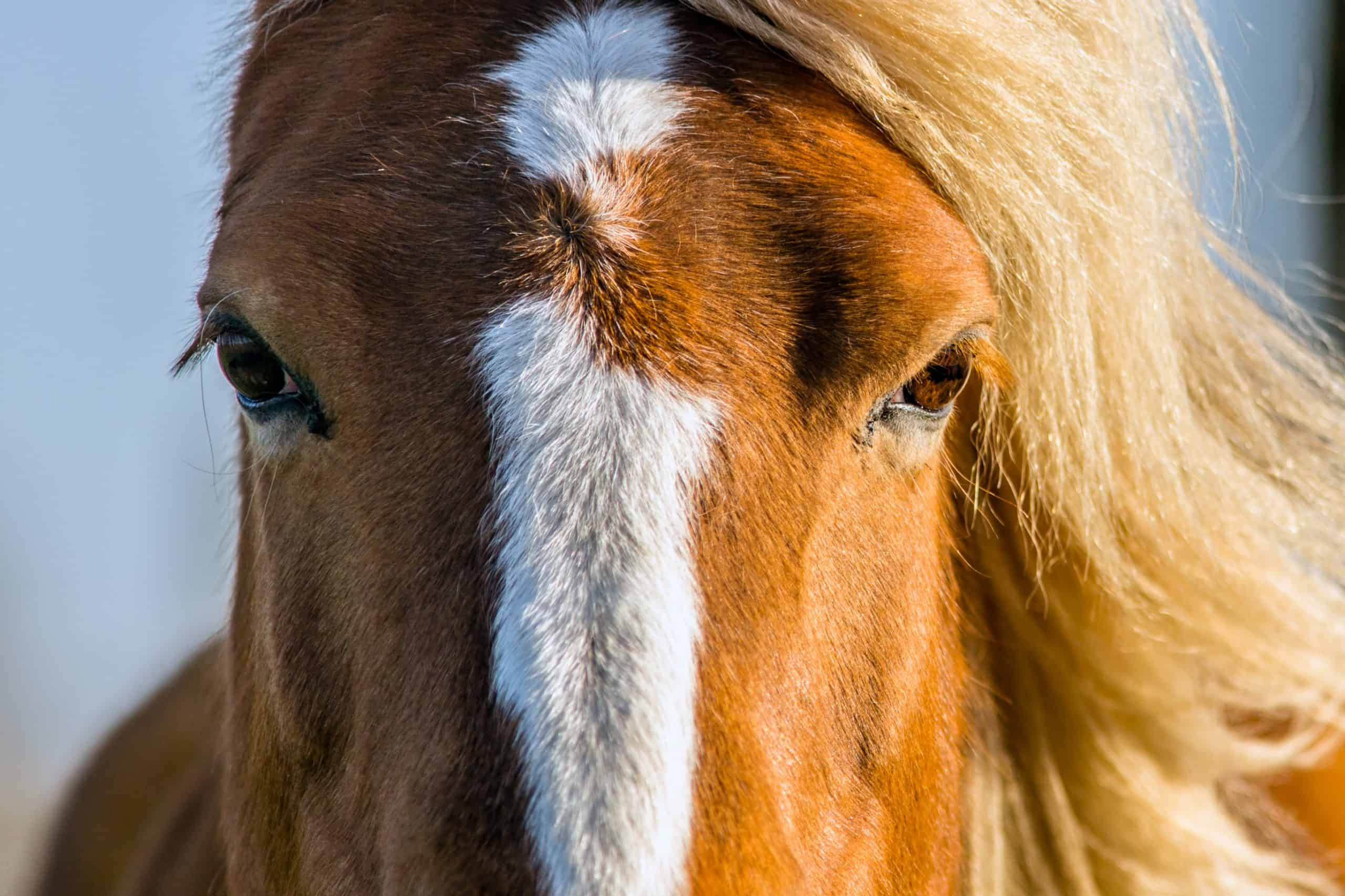 an extreme close up of an horse with light coming from one side litting up one eye
