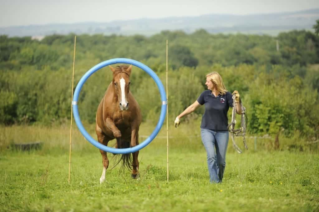 The DVD shows you how to get your horse used to all the obstacles in horse agility. Image source: The International Horse Agility Club