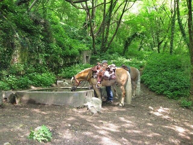 hh7 horse-trough-263705_640
