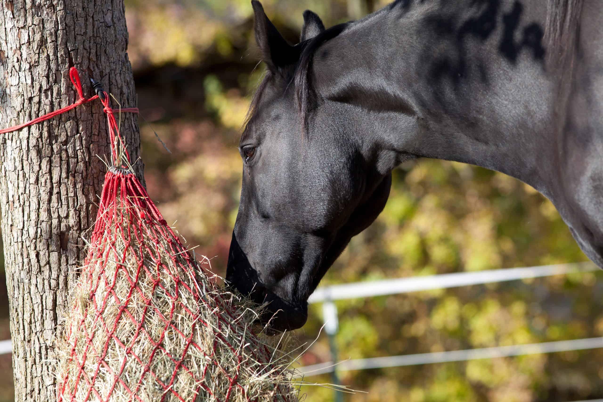 Horse feeding with hay net