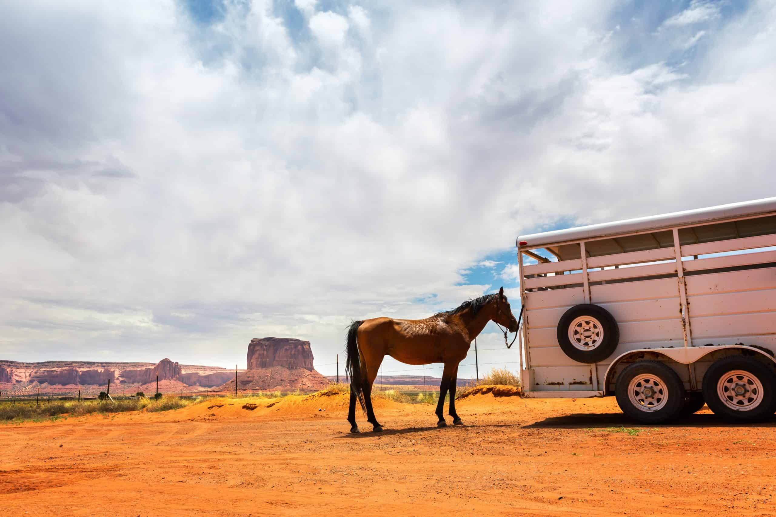 Horse near the trailer. Monument valley travaling