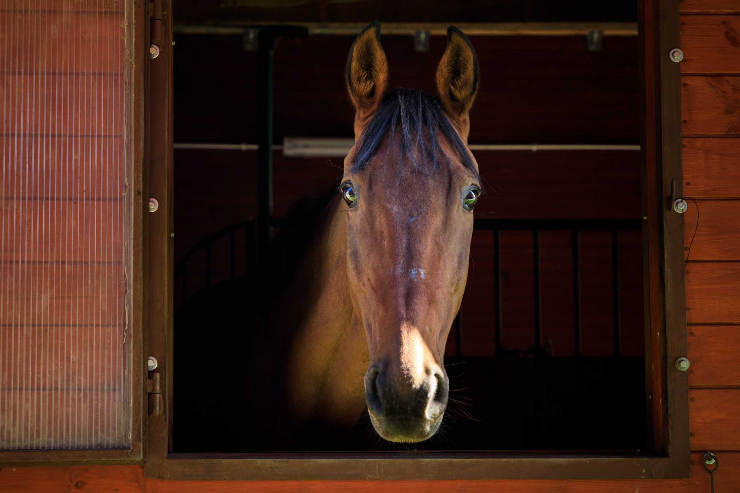 Portrait of the horse in a stall