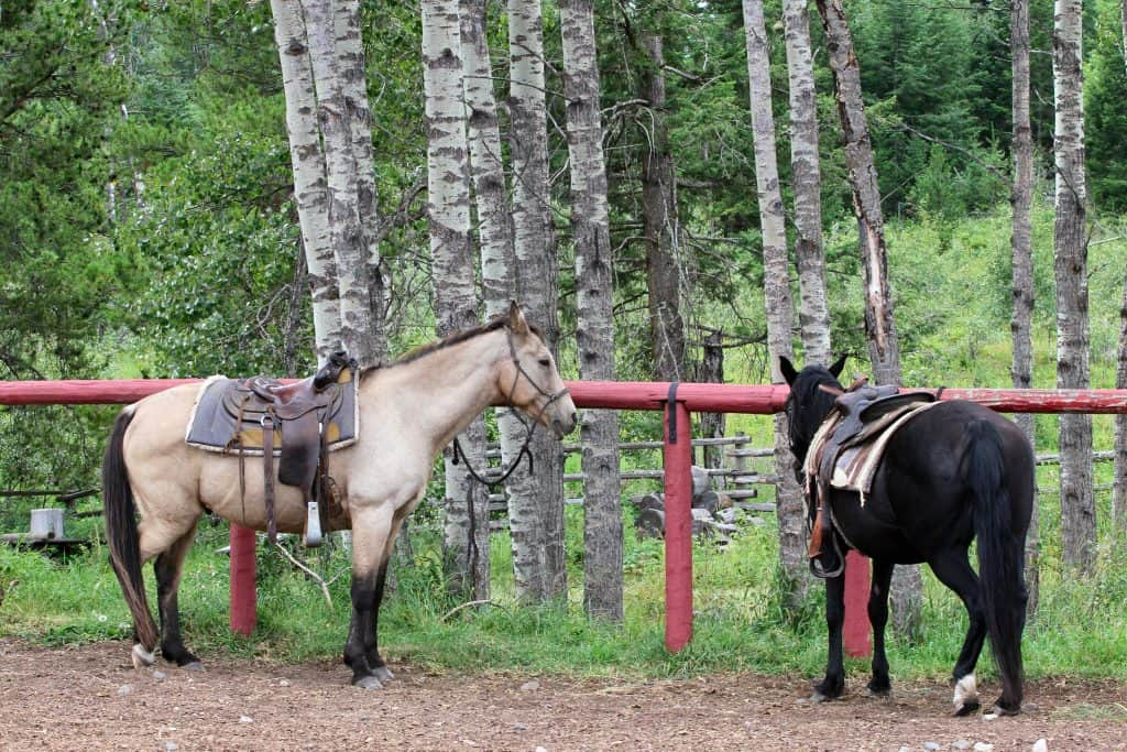 Two horses ready to go on a trail ride