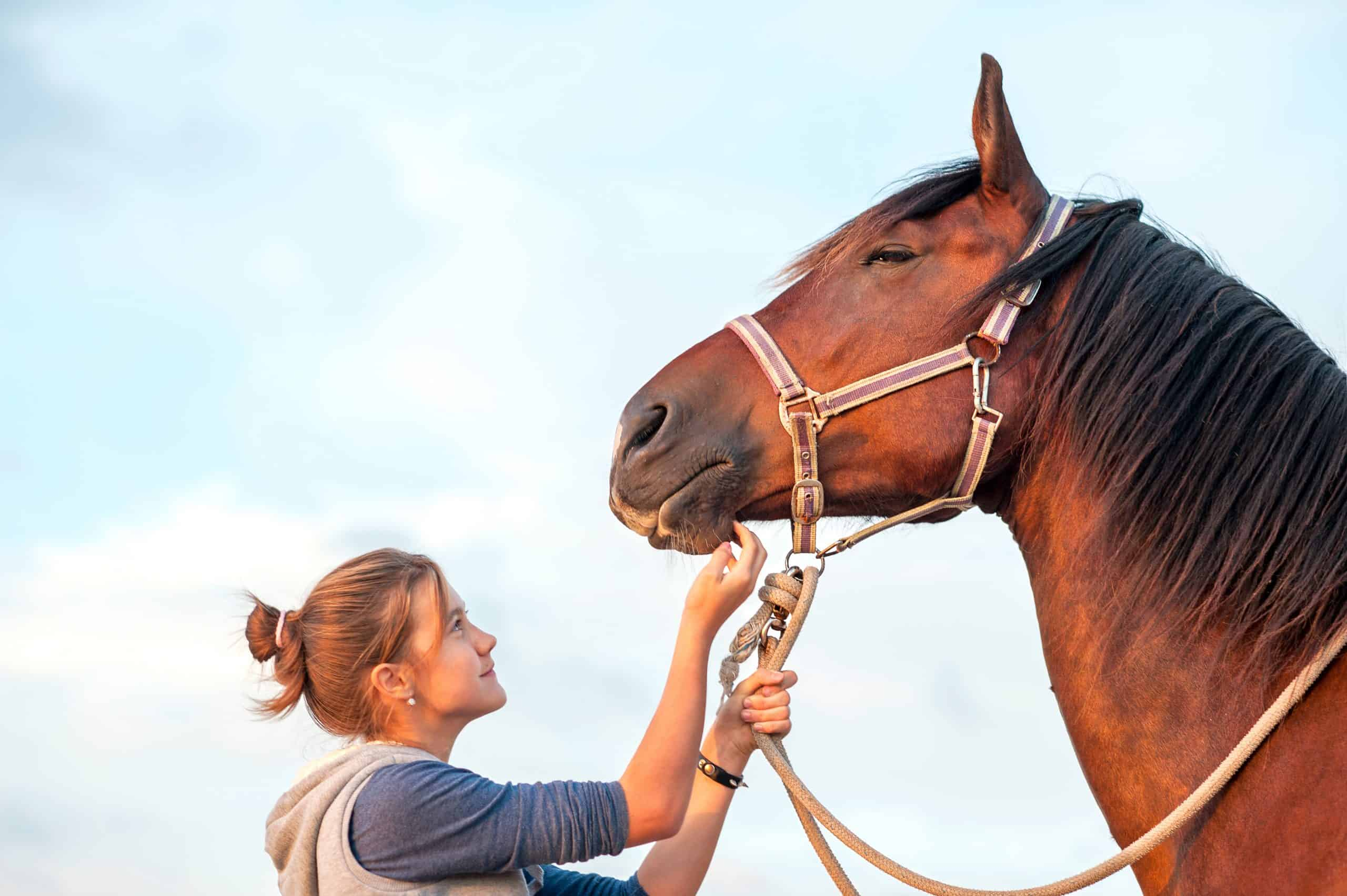 Young cheerful teenage girl stroking big chestnut horse's nose. Vibrant multicolored summertime outdoors horizontal image.