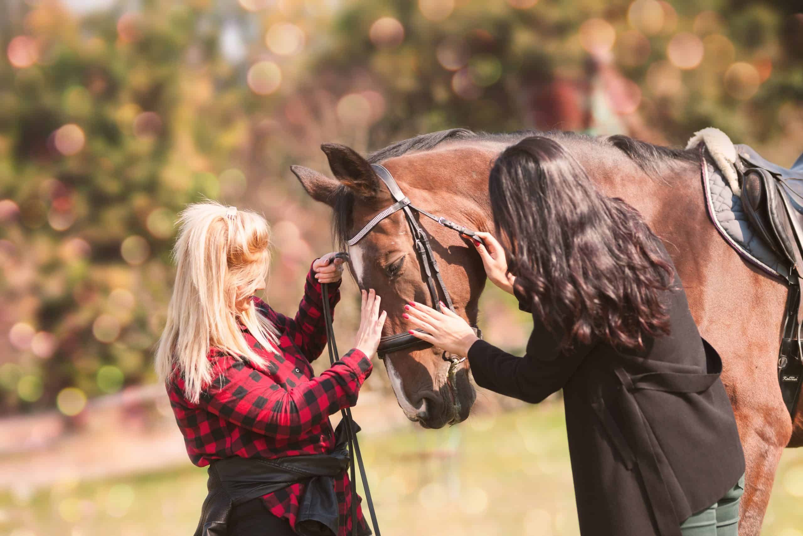 veterinarian and owner enjoying with a horse outdoors on ranch