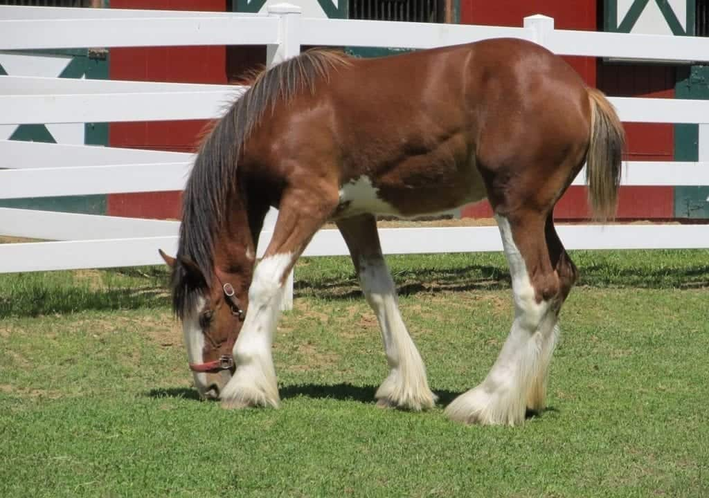 digestivetract3 clydesdale-1371876_1280