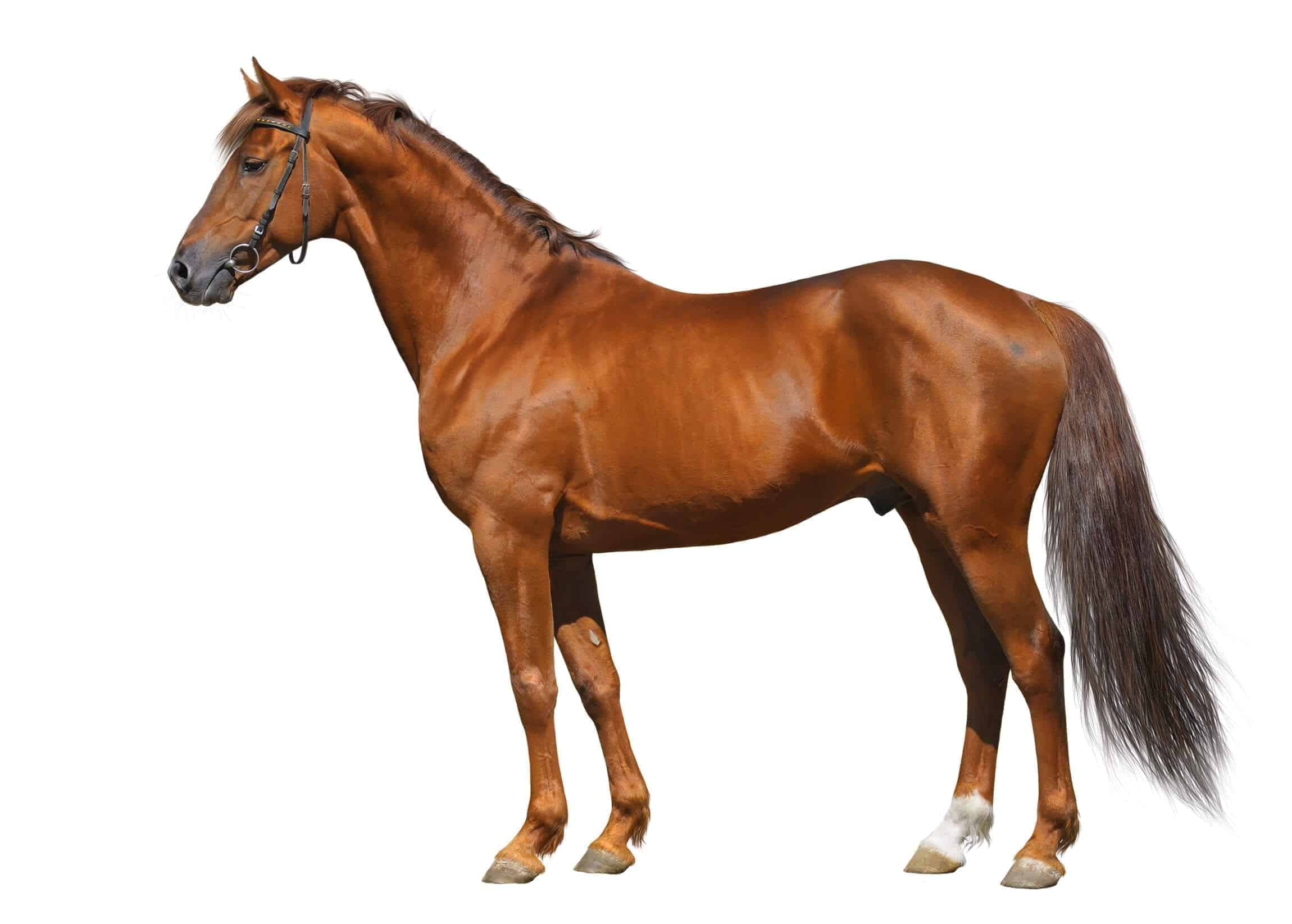 Quiz Can You Identify These Parts Of The Horse
