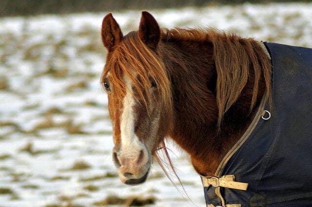 horse retirement