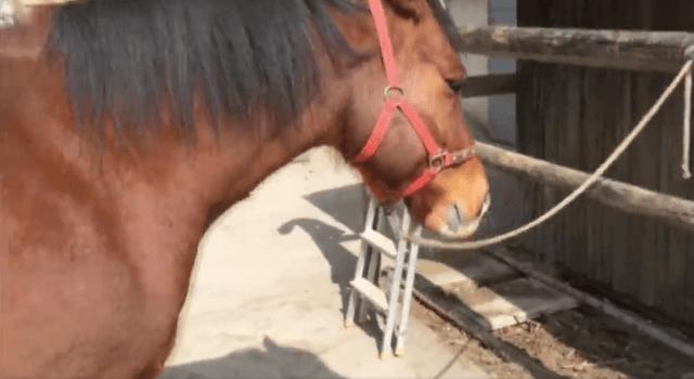 horsehoudini2