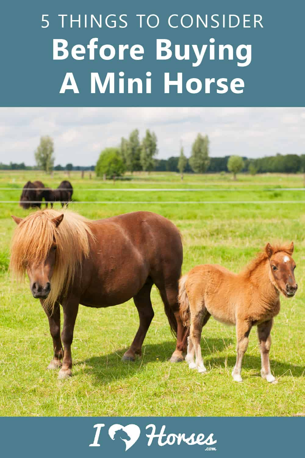Things To Consider Before Buying A Mini Horse-01