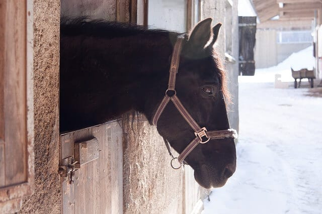 quarantine a horse