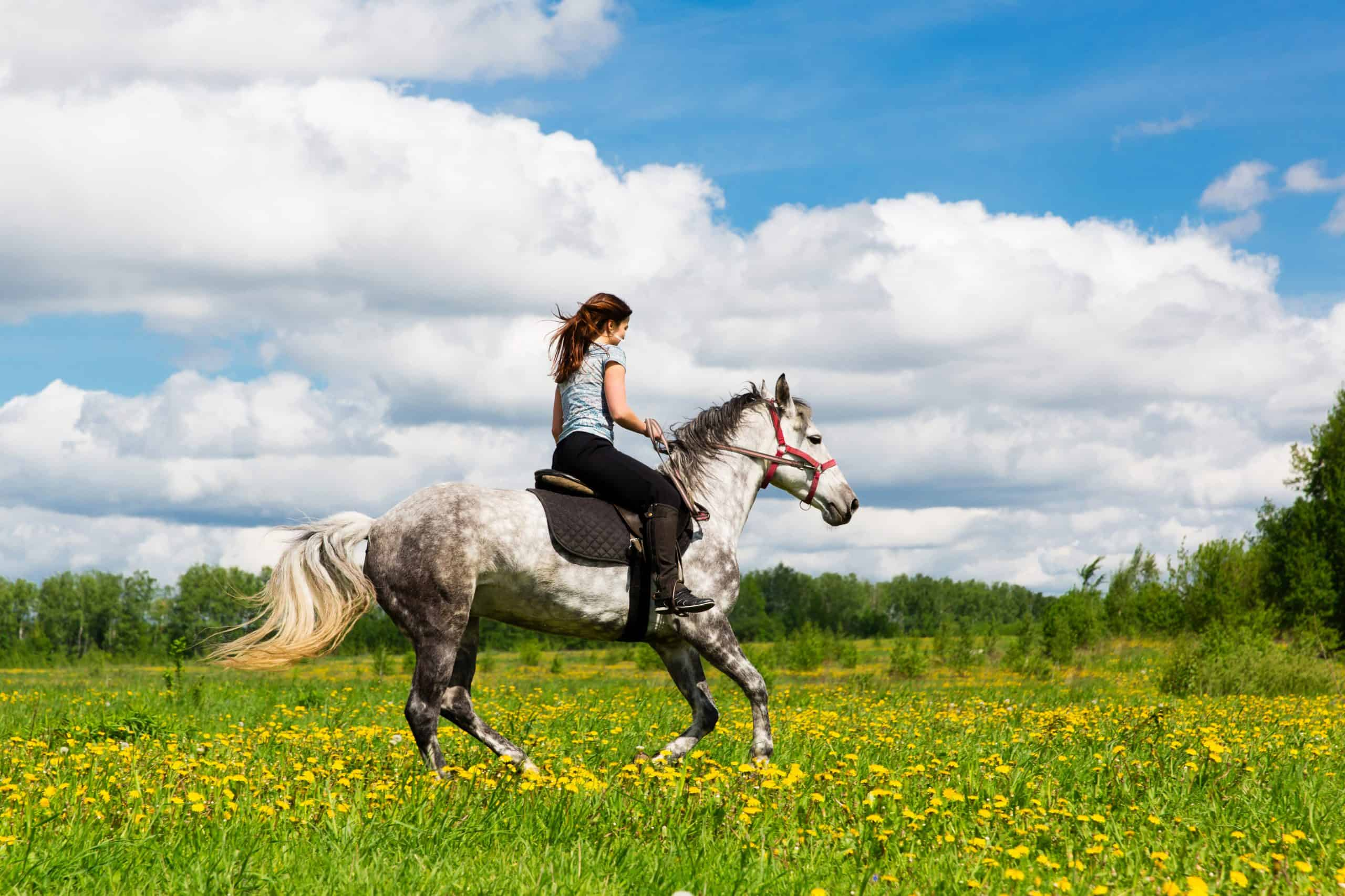 Woman riding on grey horse in the field