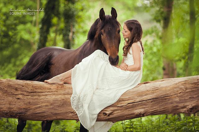 horse-17