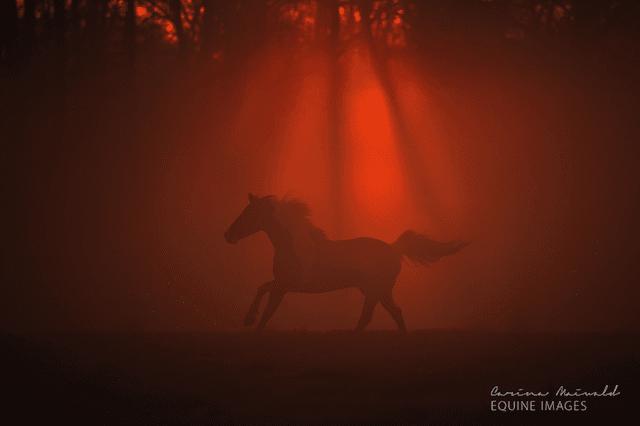 horse-22