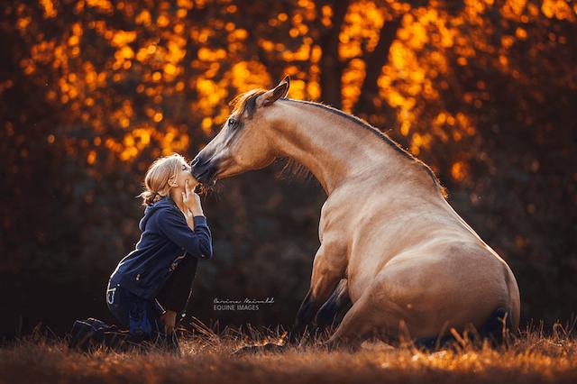 horse-9