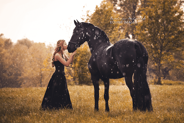 horse-19